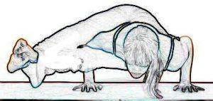 Eight Angle Pose - Astavakrasana